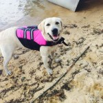 Petco Life Vest For Dogs