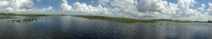 Everglades Panoramic