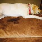 Snoozer Outlast Dog Bed